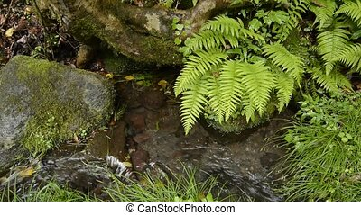 Small brook and plants - Small brook flowing between the...