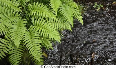 Small brook and fern - Small brook flowing beside of the...