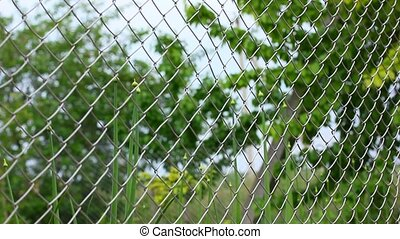 trees behind mesh fence