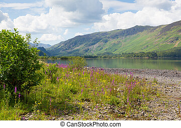 Lake District mountains pink flower - Lake District...