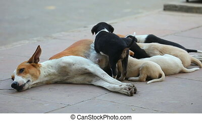 Motherhood. - Female dog feeding her cubs.