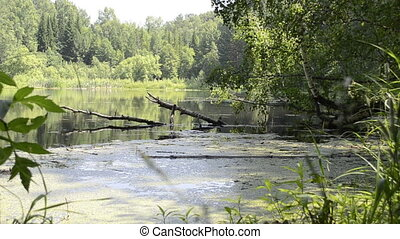 small pond in the woods