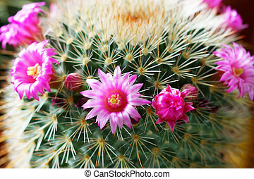 Cactus flower plant.
