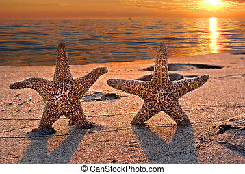 Honeymooners - Pair of starfish on the beach at sunset