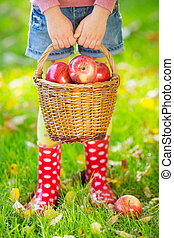 Kid holding basket with apples in autumn outdoors...