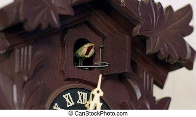 cuckoo clock cuckoos 12 times