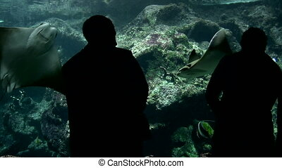 Visitors at the Aquarium - Canon HV30. HD 16:9 1920 x 1080 @...