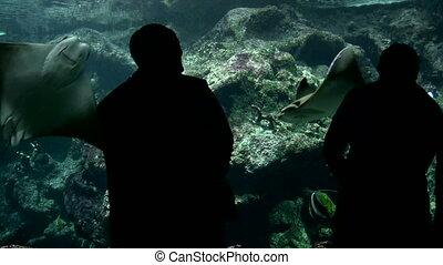 Visitors at the Aquarium - Canon HV30. HD 16:9 1920 x 1080 @...