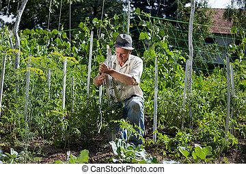 Peasant  in vegetable garden