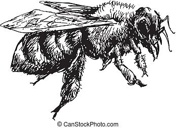hand drawn bee - illustration of hand drawn bee