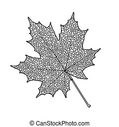 Maple leaf - Silhouette of the textured maple leaf, vector...