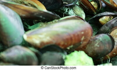 Mussels and rapans - The recovery of mussel shell and rapans