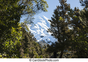 Mount Egmont - Mount Egmont framed by native bush