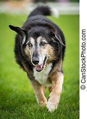 Seltene Ohrenstellung - Ein etwas Ältere Mischlings Hund...