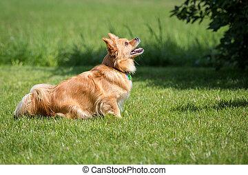 Blick nach oben - Kleiner brauner Mischlings Hund schaut...