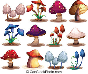 M ushroom set - Illustration of a set of different mushrooms