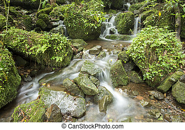 Brook flowing - Small brook flowing among the mossy stones