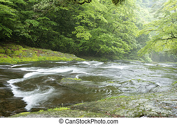 Limpid stream flowing over the gentle slope in green forest