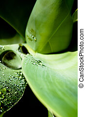 Texture of a leaf with water drops