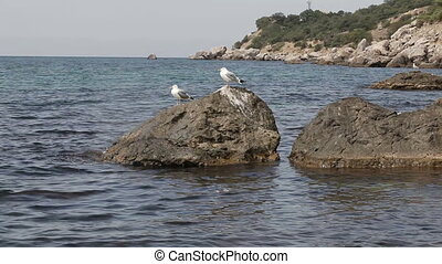 Seagulls on stones Coast - Seated on a rock gull flies