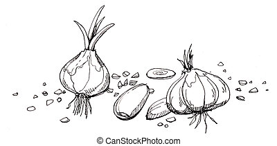 Garlic illustration drawing Hand drawn of garlic in...