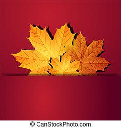 Autumn leaves