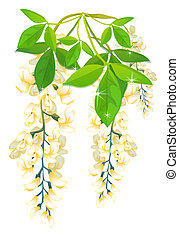 Wisteria - orange Wisteria Flowers with green leaf on the...