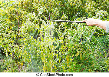 spraying of pesticide on country garden