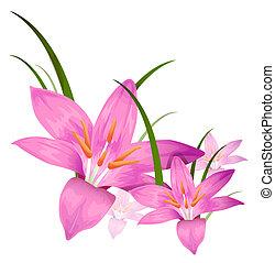 bíbor, virág