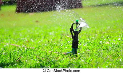 water jet sprinkling green grass close-up