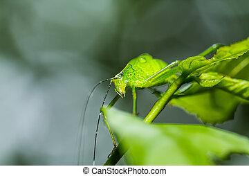 strange grasshopper