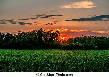 Countryside sunset with a corn field