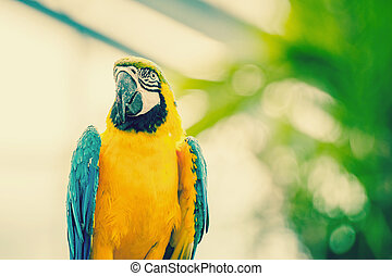 Beautiful blue and yellow macaw parrot - Beautiful macaw...