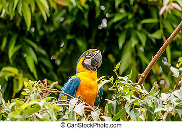 Macaw parrot in a rainforest - Colorful macaw parrot in a...