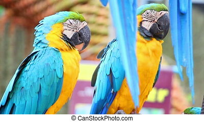 sleepy colorful parrot macaw on branch