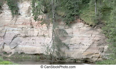 One medium size tree trunk fall upside down the mountain...