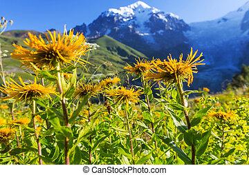 Caucasus, Bjerge
