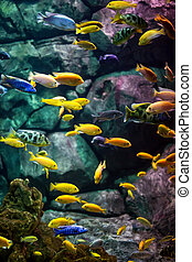 fishes. - fishes in an aquarium ...