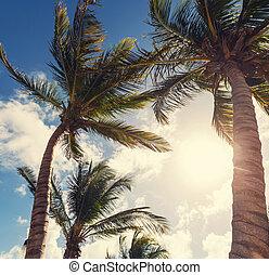 Tropical beach - Serenity beach