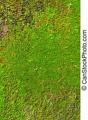 Moss on wall texture background. - Moss on wall texture...