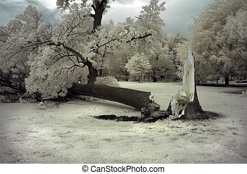 Broken Tree - Tree damaged from strong winds in a major...
