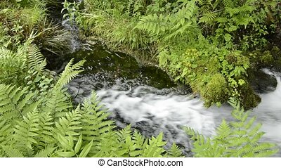 Torrent and green - Small torrent laterally flowing between...