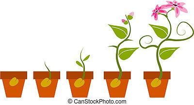 fases, crescimento, planta