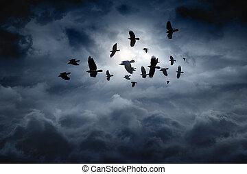 Flying ravens - Flock of flying ravens, crows in dark moody...