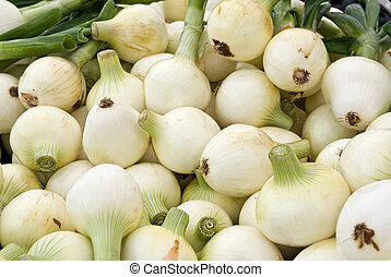 Pungent Pile - Pile of white onions at the market