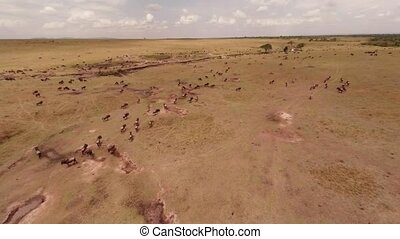 Savanna Aerial shot - Aerial Masai Mara National Reserve,...