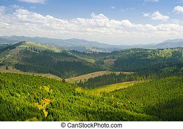 Wonderful view in forest mountain. Carpathian, Ukraine.