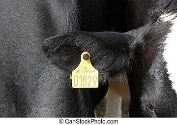 Cow - A cow ear