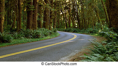 Two Lane Road Cuts Through Rainforest - Sunlight can barely...