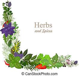 collezione, erbe, spezie, lei, disegno